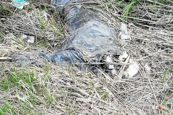 Скелет лежал в канаве недалеко от проезжей части