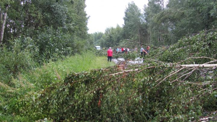 В Рыбинском районе дороги завалило деревьями: видео