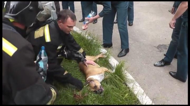 Пожарные реанимировали надышавшихся угарным газом собак