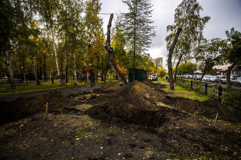 Городские службы готовят место для посадки лип и дубов