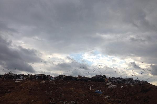 В Левенцовку будут свозить пластиковые отходы из шести регионов