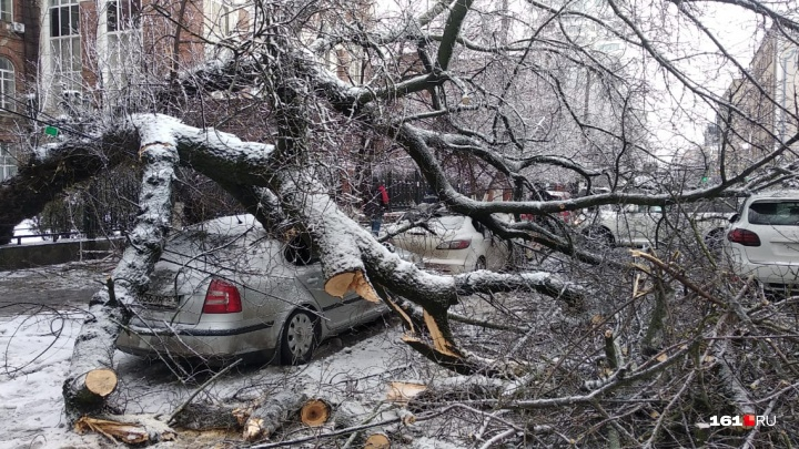 В центре Ростова акация рухнула на «Порше», «Мазду» и «Шкоду»