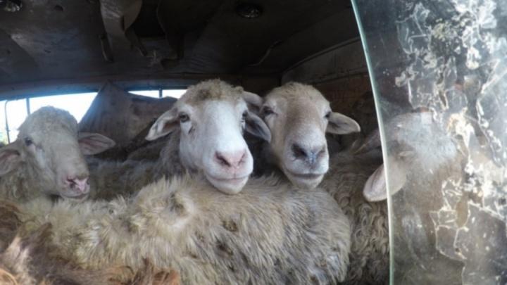 После обучения биржевой торговле 36 омичей пожаловались Путину на фирму, названную в честь овец