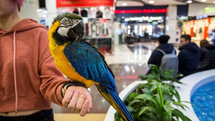 Сибирячка спасает из «Сан Сити» депрессивного лысеющего попугая по кличке Алла Борисовна