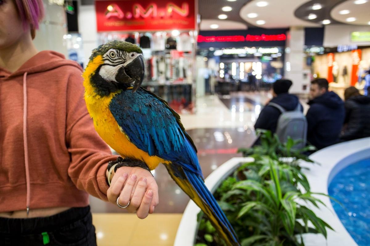 На облезлых попугаев новосибирцы пожаловались в новогодние каникулы