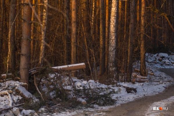 Тайник был обнаружен недалеко от трассы Екатеринбург — Пермь