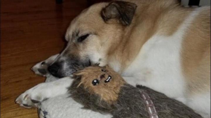Омский пёс Лешик встретил первую зиму в Америке
