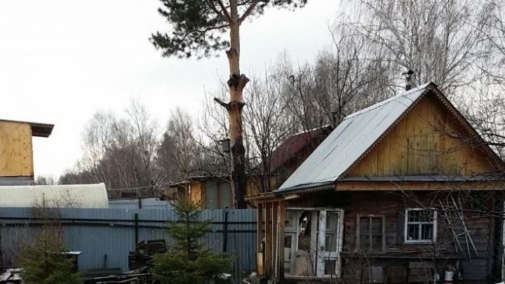 В трёх коллективных садах на Чусовском тракте пропал свет из-за дерева, оборвавшего провода