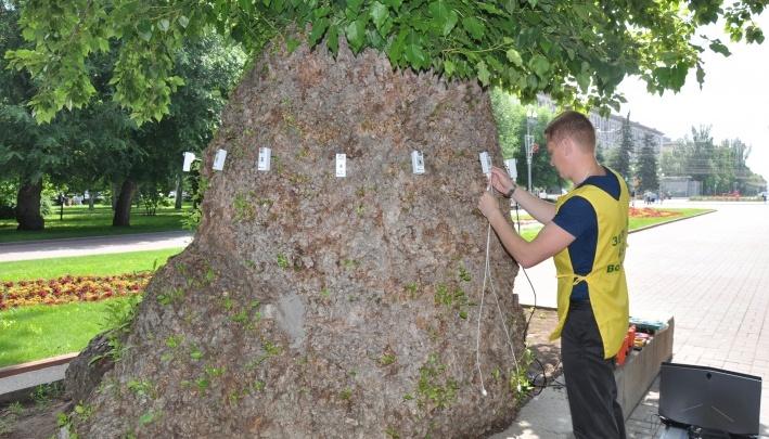 Может упасть при непогоде: Сталинградский тополь в центре Волгограда нуждается в экстренной помощи