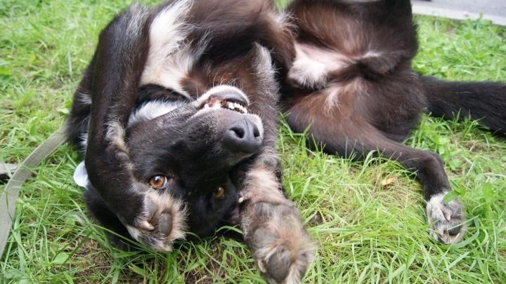 «Новый хозяин, найдись!»: «ЗООзащита» пригласила на ежегодную выставку-раздачу животных из приюта