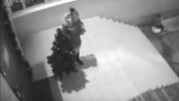 Волжане ищут «антиснегурочку», укравшую елку со школьного двора
