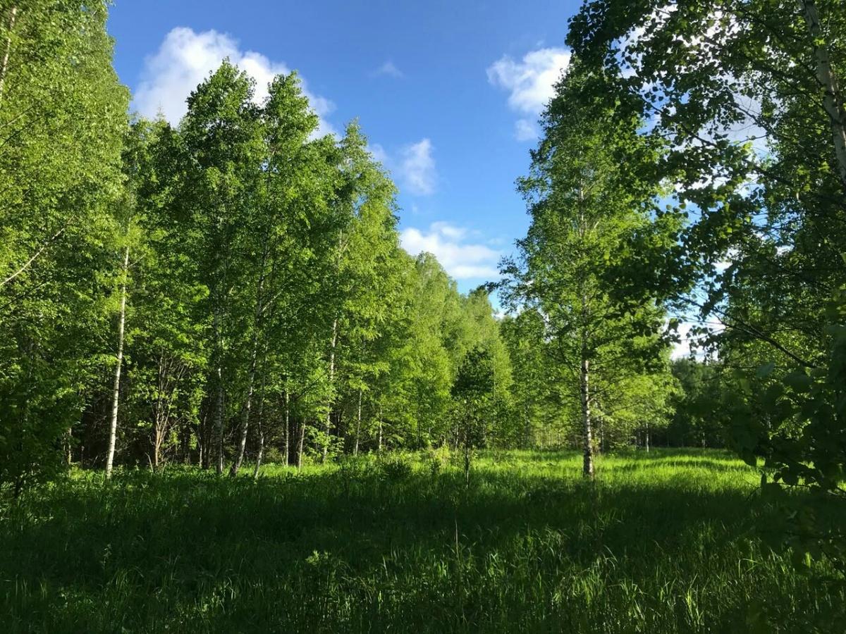 С виду лес как лес. Но вы бы согласились остаться здесь на ночь?