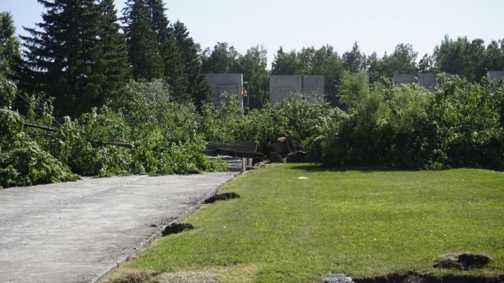 В сквере Славы спилили деревья