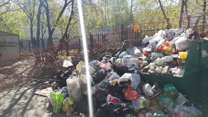 Горы отходов и полчища крыс: из дворов на Вторчермете перестали вывозить мусор
