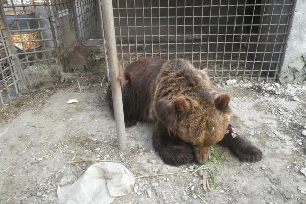 Медведица Маша не любит пьяных