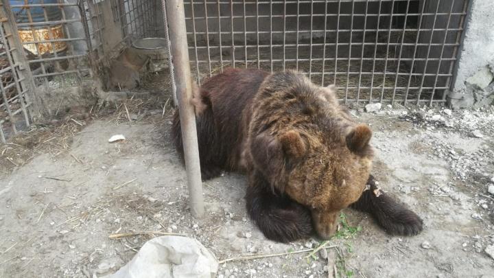 Медики ГБ-1 смогли спасти омича, которому откусила руку медведица