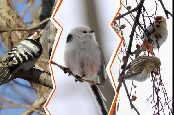 Сможете ли вы сказать, что за птицы на фото?