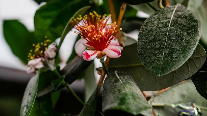 Сумерки и экзотика. В Пермском Ботаническом саду университета возобновили ночные экскурсии