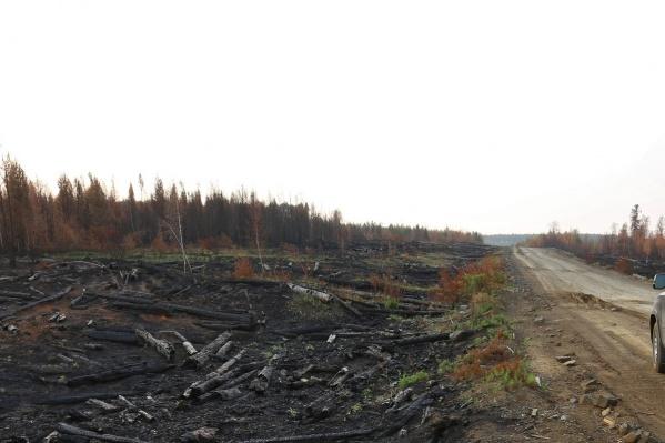 Следы незаконной вырубки сейчас также ищут в лесах Богучанского района, где были масштабные пожары