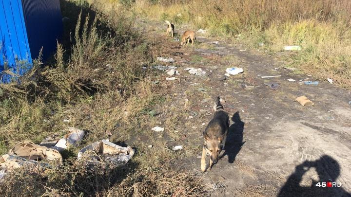 В Кургане выпустили на свободу первых чипированных бездомных собак