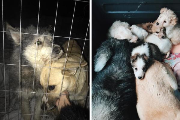 Семь собак могли остаться на улице или быть пойманными службами отлова после смерти хозяйки
