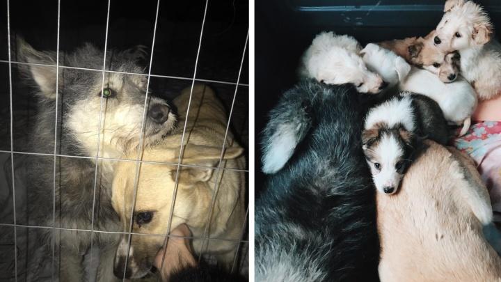 Две сибирячки спасли от отлова пару влюблённых собак и пятерых щенков