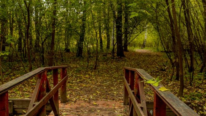 Остановитесь и смотрите: десять фотографий, доказывающих, что осень — самое красивое время года