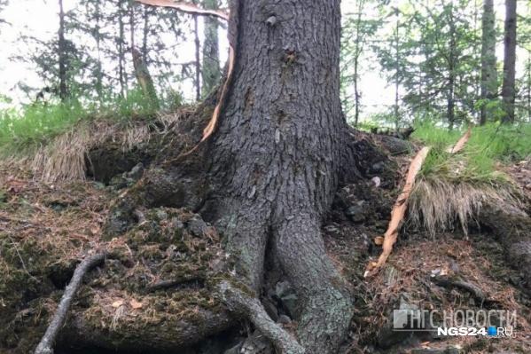 Местные жители и спасатели прочесывают лес с ночи