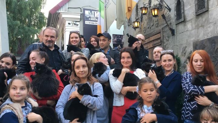 На кастинге в театре «У моста» в труппу взяли 20 чёрных котов