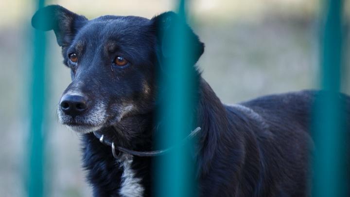 «Легко быть добрым чужими руками»: куда звонить, если нашел собаку или кошку в Волгограде