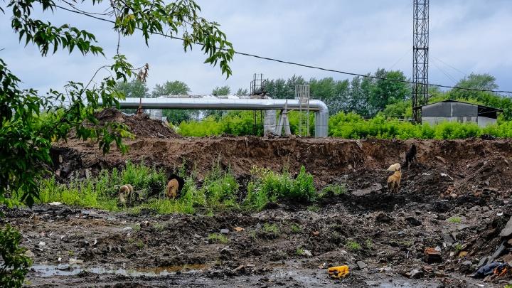 Роспотребнадзор определил санитарно-защитную зону строящегося приюта в Верхних Муллах
