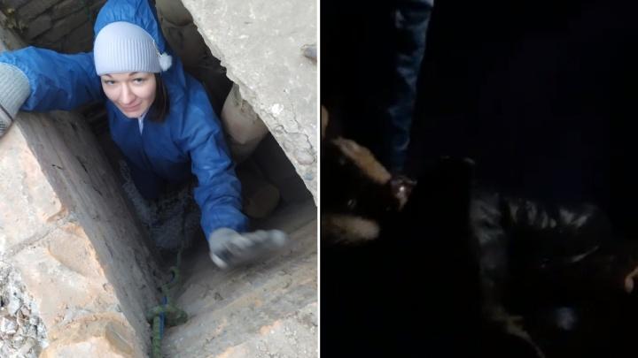 Волонтеры спустились в шахту теплотрассы для спасения заблокированных щенков
