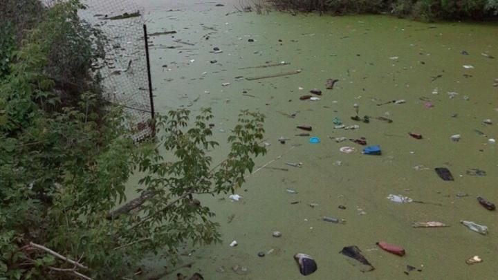 Натуральное болото: жителей Башкирии возмутило отвратительное состояние реки Стерли