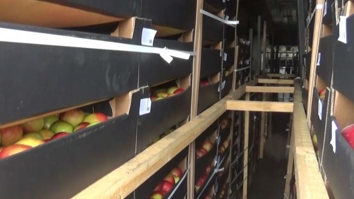 Везли в Самару: челябинская таможня тормознула крупную партию польских яблок