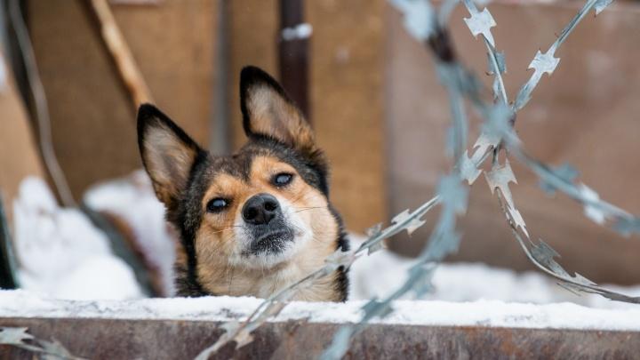 Отлов одной бездомной собаки или кошки в Самарской области оценили в 1509 рублей