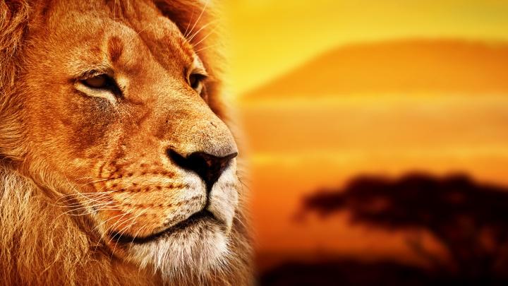 Легенда возвращается спустя 25 лет: на экраны выйдет киноверсия мультфильма «Король Лев»