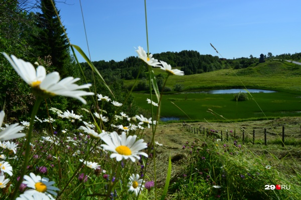 На холмах косят траву. Но кое-где еще удалось застать прекрасные полевые цветы