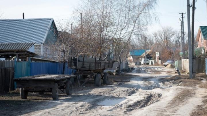 В Волгоградской области бродячая собака растерзала женщину