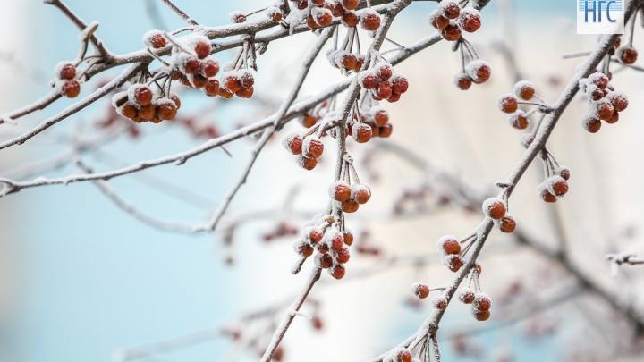 В первые выходные зимы ударит мороз
