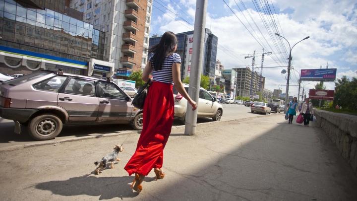 Пошла жара: в Новосибирск на два дня пришло лето