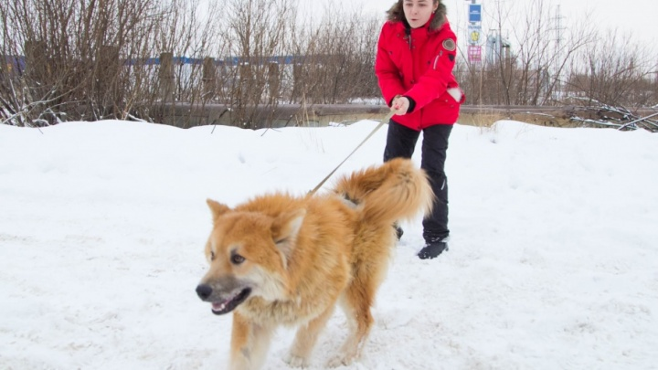 Солёные улицы Архангельска разъедают лапы собакам