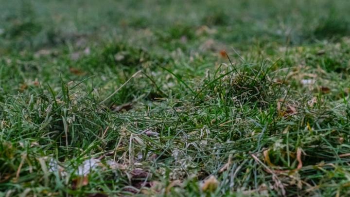 МЧС предупредило о заморозках в Прикамье до -3 градусов
