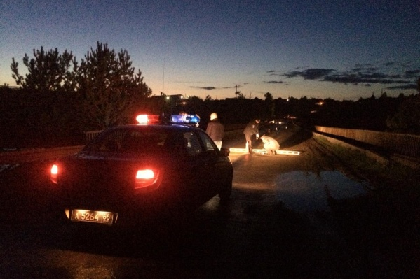 Полицейские проведут экспертизу, чтобы выяснить, был ли водитель пьян
