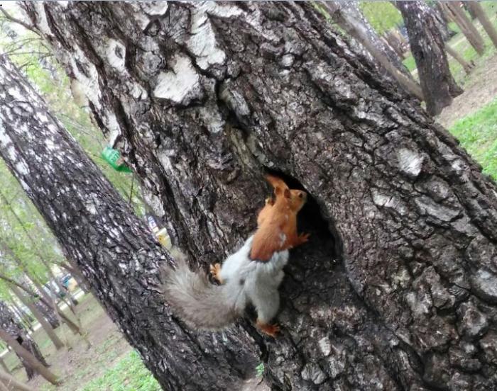 Белка в парке «Березовая роща»