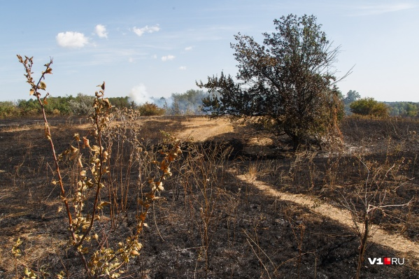 Пожар возник в 10 километрах от Перекопки