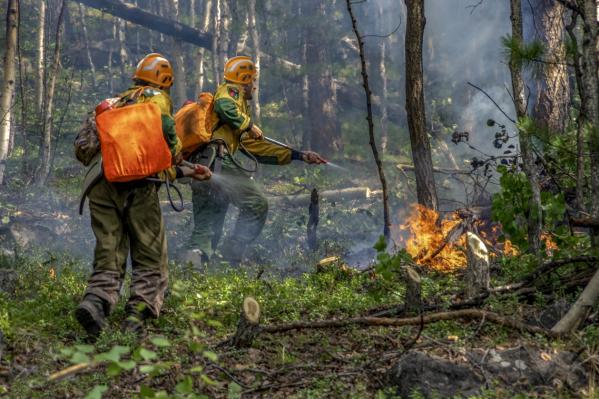 Лесопожарный центр занимается тушением пожаров с земли и воздуха