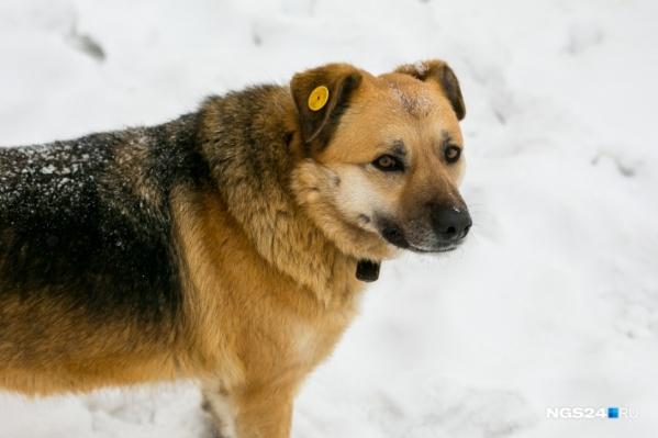 Отловом бродячих псов продолжат заниматься защитники животных