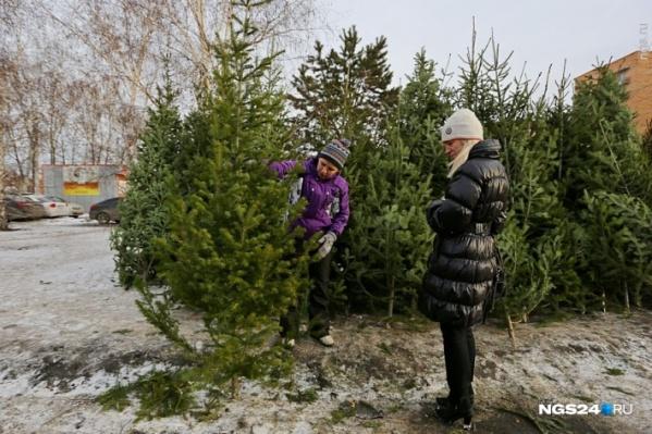 В этом году елки можно будет купить по 51 адресу