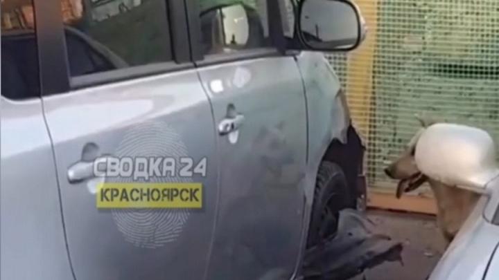 Бездомные собаки обгрызли припаркованную машину на Взлётке