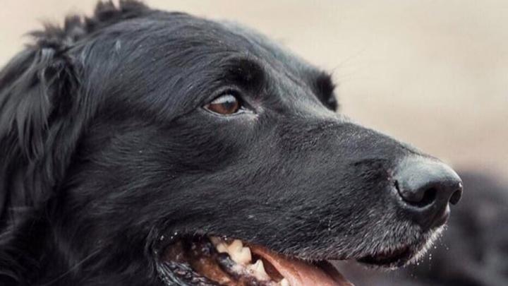 «Никогда раньше не видела, как собаки плачут»: родственники умершего хозяина решили усыпить пса